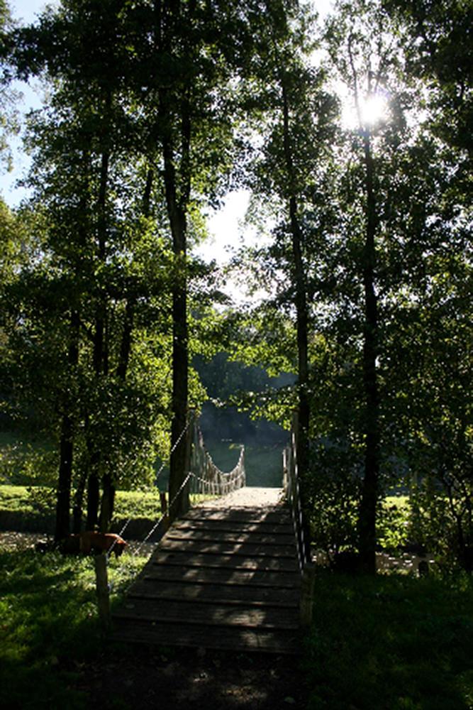 alder_-_trees